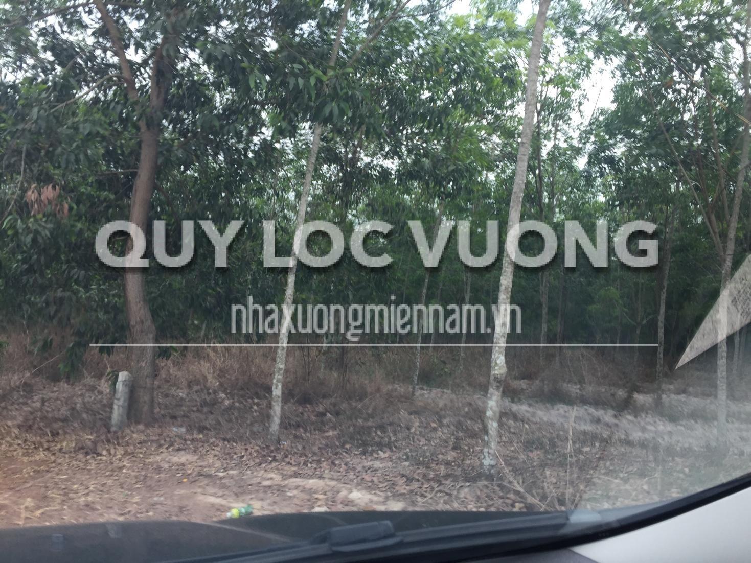 Cho thuê đất trống gần KCN VSip2 A thị xã Tân Uyên diện tích 15.000m2